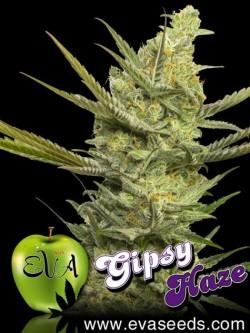 Gipsy Haze x3 Fem Eva