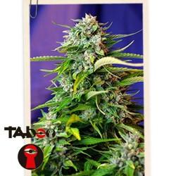 Jack 47 Auto x3+1 Sweet Seeds