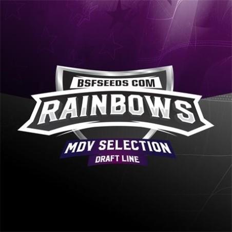Rainbows x12 Fem Bigger Stronger Faster Seeds.
