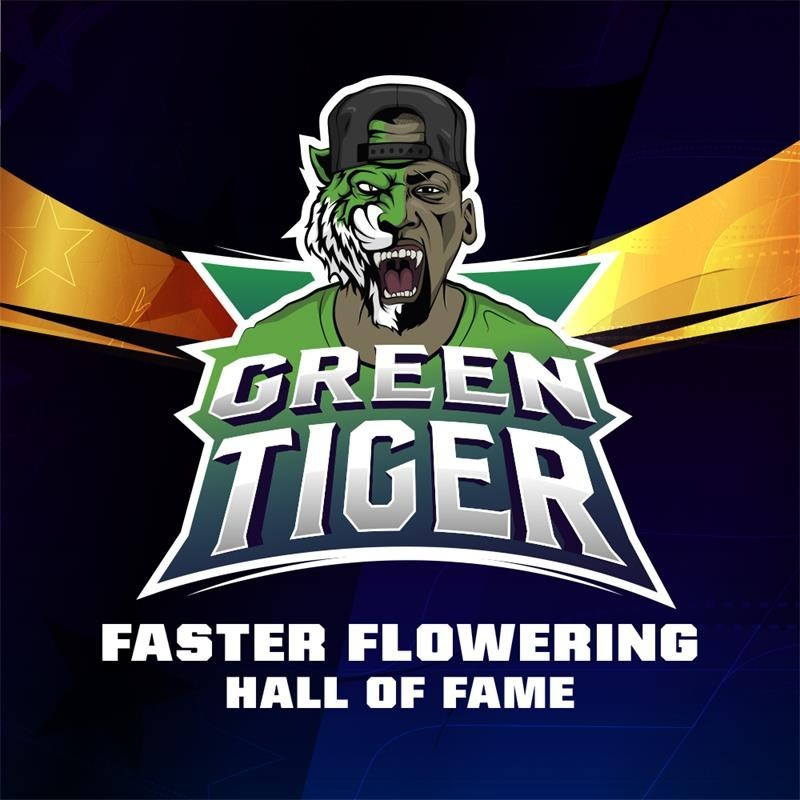 Green Tiger x4 - Bigger Stronger Faster Seeds